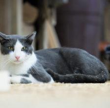 Rassmus, Mill Shop Cat